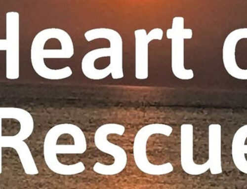 Heart of Rescue: A Bipolar and PTSD Self-Help Memoir